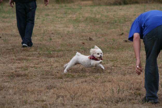 Bentley decides football is fun!