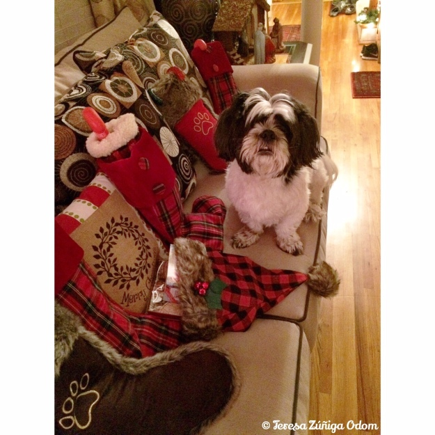 Mama...I hope Santa knows which stocking is mine!  #conversationswithlucy
