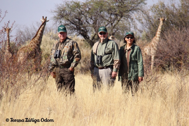 Our encounter with a safari of giraffe in Namibia, Africa this past August.