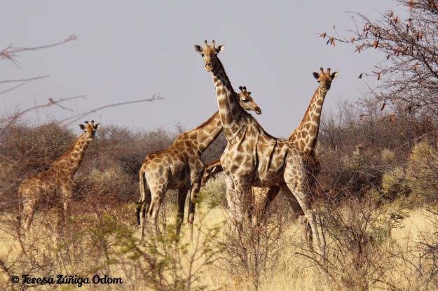 August 2016 Namibia, Africa - Hunters Namibia Safaris